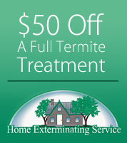 Special Offer, Termite Treatments, Pest Control in Dallas, TX